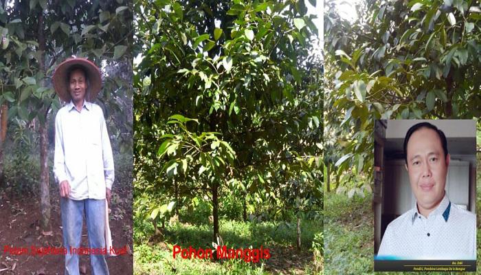 ketahanan pangan, swasembada pangan, bangan indonesia, sektor pertanian, sektoir perkebuman, ekspor pertanian, zz zaki, ayep zaki, bidang pertanian, negara agraris, budidaya tanaman keras, tanaman keras, nusantaranews