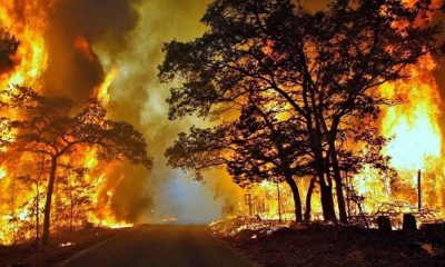 karhutla, kebakaran hutan, kalimantan tengah, hutan kalteng, kebakaran kalteng, lahan kalteng, pn palangkaraya, nusantaranews