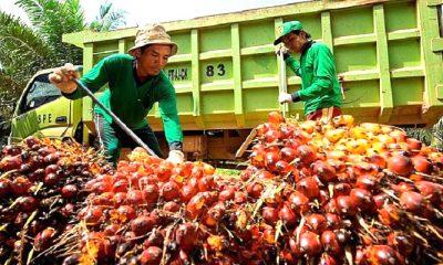 harga tbs sawit, harga sawit, sawit nunukan, nunukan, cpo, petani sawit, kadin nunukan, perbatasan malaysia, perbatasan indonesia, warga perbatasan, petani perbatasan, kebun sawit, perkebunan sawit, kalimantan utara, nusantaranews