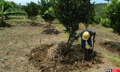 Penanaman pohon buah di Desa Rombasan Kecamatan Pragaan Kabupaten Sumenep (Foto Mahdi/NUSANTARANEWS