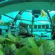 Pertanian Bawah Laut (Foto Dok. De-gustare)