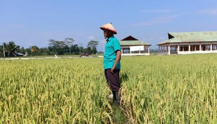 Ayep Zaki Saat Pantau Ladang Padinya (Foto Istimewa)