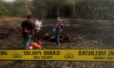 terpanggang api, bakar kebun, kebun bambu, purwakarta, warga purwakarta, nusantaranews, nusantara news