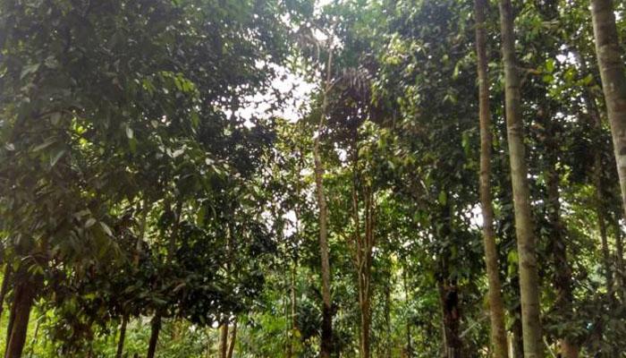 Cara terbesar untuk memperlambat perubahan iklim adalah dengan menanam lebih banyak pohon (Foto Eriec Dieda)