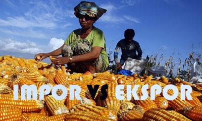Impor Jagung vs Ekspor Jagung (Ilustrasi/Istimewa)