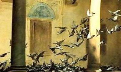 Burung Gereja. (Ilustrasi/Istimewa)