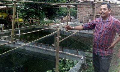 H. Nardi Selaku Kades Karyamekar, Kecamatan Cibatu, Purwakarta sedang meninjau lokasi budidaya ikan lele sebagai program kemandirian ekonomi perdesaan. (FOTO: NUSANTARANEWS.CO/Fuljo)