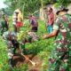 Kodim 0813 Bojonegoro melaksanakan kegiatan serbuan teritorial berupa gerakan penghijauan disepanjang bantaran Sungai Bengawan Solo. (FOTO: NUSANTARANEWS.CO/Pendim0813)