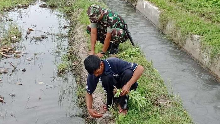 Koramil 0824/24 Ambulu Karya Bakti TNI Bantu Tanam Refugia Amankan. (FOTO: Sis24)