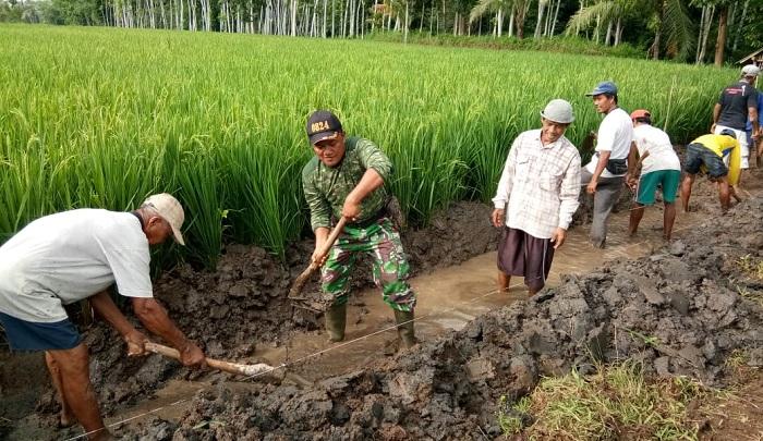 Pertahanan Produktifitas Pertanian, Babinsa Dampingi Petani Normalisasi Irigasi