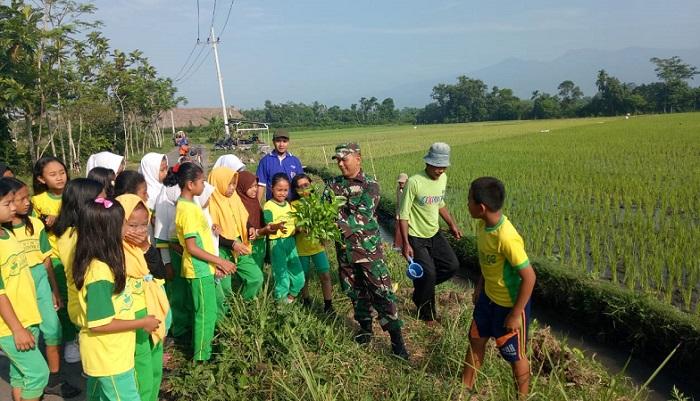 Babinsa Serda Haryanto, Petugas Penyuluh Lapang (PPL) se Kec Rambipuji dipimpin Sukarto dan 45 siswa-siswi SDN Kaliwining menanam bunga refugia. (FOTO: NUSANTARANEWS.CO/Sis24)