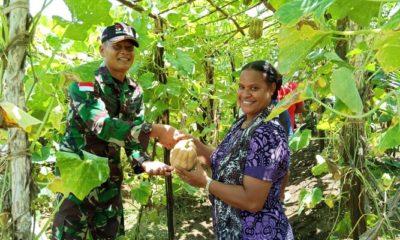 kampung kuler papua, budidaya labu madu, satgas pamtas, yonmek 521 dy, kabupaten merauke, nusantaranews, nusantara news