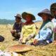 Mentan Amran bersama petani padi. (FOTO: Dok. Istimewa)
