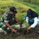 Personel Koramil Rambipuji Tanam Refugia Bersama Petani