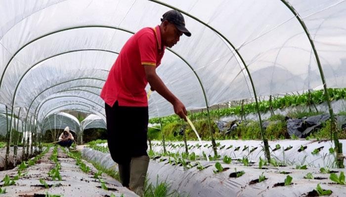Petani Sayur untuk Ekspor di Lembang, Bandung. (FOTO: Dok. Kementan)