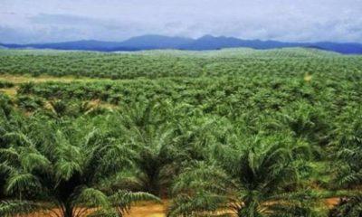 lahan sawit, reforma agraria, petani indonesia, hak asasi petani, nusantaranews