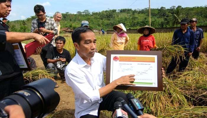 bidang pertanian, bidang energi, bidang pangan, bidang sda, jokowi gagal, pertanian indonesia, swasembada pangan, kedaulatan pangan, janji jokowi, nusantaranews