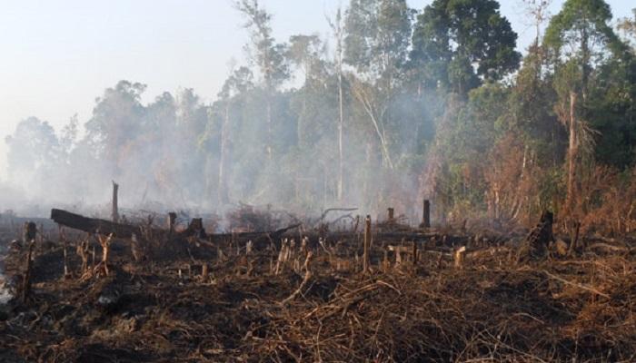 kebakaran hutan, klaim jokowi, pemerintahan jokowi, lingkungan hidup, rizal ramli, nusantaranews