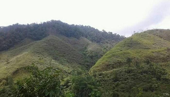 Salah satu hutan di Kalimantan Barat. (Foto: Ilustrasi/Dok. NUSANTARANEWS.CO)