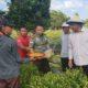 Dandim 0911/Nunukan disela-sela Panen Raya Cabai di Nunukan, Kalimantan Utara. (Foto: Eddy Santri/NUSANTARANEWS.CO)
