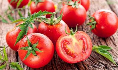 Mengenal Kandungan dan Manfaat Tomat (Foto Istimewa)