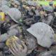 Yonif 511/DY Gelar Tradisi Warga Baru di Candi Penataran. (FOTO: NUSANTARANEWS.CO/Doni)