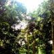 Pohon ingatan. (Foto: Ilustrasi/Eriec Dieda/NUSANTARANEWS.CO)