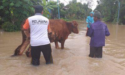 Relawan BMH Jatim. (FOTO: NUSANTARANEWS.CO/Mustofa)