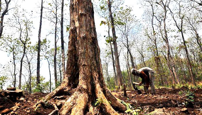 menjenguk hutan, puisi ivan aulia, puisi indonesia, puisi nusantara, penyir indonesia, penyair nusantara, nusantaranews