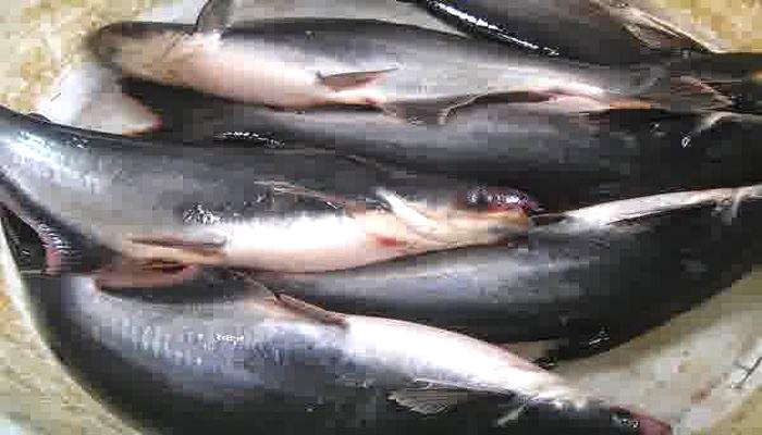 ikan patin, harga ikan patin, jatim, dprd jatim, nusantaranews