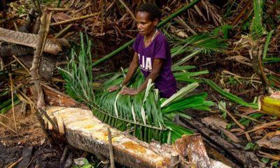 Tradisi Barepan dan Cinta Pembuat sagu di Tambrauw Papua Barat. (FOTO: Dok. Humas Kemenpar)