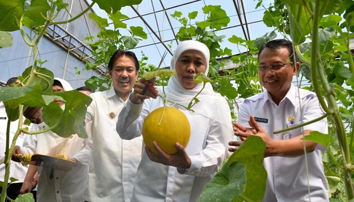 gubernur jatim, khofifah indar parawansa, melon prima, nusantaranews