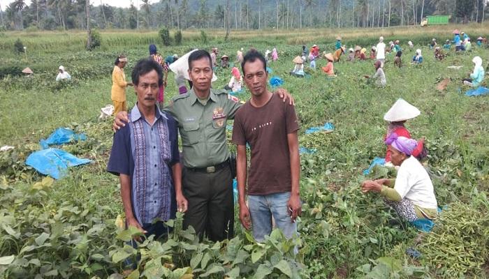 Petani Panen Kedelai di Kabupaten Jember. (Foto: Siswandi)