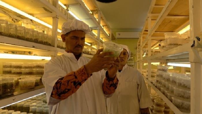 Direktur Jenderal Hortikuktura, Kementerian Pertanian (Kementan), Suwandi saat berkunjung ke PT Agri Kultura, Desa Warugunung, Kecamatan Pacet Kabupaten Mojokerto. (FOTO: Dok. Kementan)