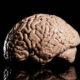 Ilustrasi Otak Manusia (Foto Istimewa)