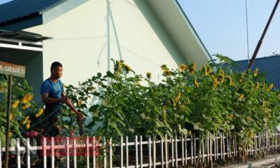 Kisah Pratu Gunawan, Menyulap Lahan Mati Jadi Taman Bunga Matahari. (Foto Dok. NUSANTARANEWS.CO).