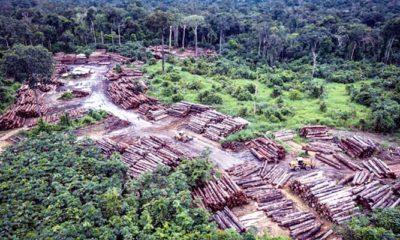 Keterlibatan Presiden Brazil Dalam Penghancuran Amazon