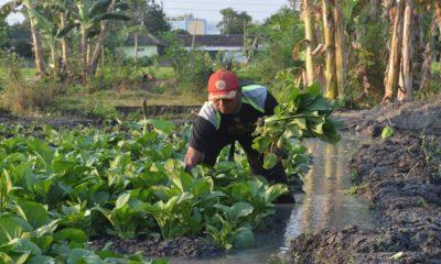 Bercocok tanam sayur usai dinas, Prajurit Yomarmed 12 Kostrad, Serka Ahmad Solikin patut jadi inspirasi. (Foto: Istimewa)
