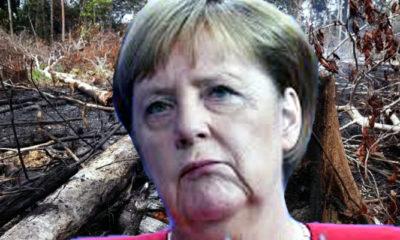 Bolsonaro pecat kepala INPE, Jerman potong Anggaran Program Hutan Amazon