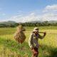 Kebijakan WTO Disebut Merusak Kedaulatan Petani Kecil (Foto oleh Heavy Rains)