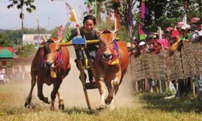pemkab sumenep, lomba karapan sapi, tingkat kabupaten, lapangan giling, nusantaranews, sumenep