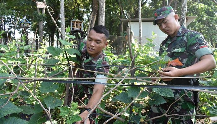 Bercocok Tanam Organik, Yonarmed 12 Divif 2 Kostrad Sulap Lahan Tidur Jadi Produktif. (Foto: Istimewa)