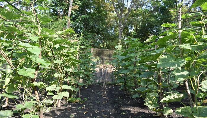 bercocok tanam, tanam organik, yonarmed 12, divif 2 kostrad, lahan tidur, jadi produktif, nusantaranews