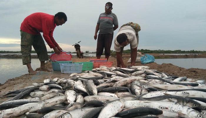 harga ikan, ikan bandeng, kabupaten pati, anjlok, pembudidaya ikan, nusantara news