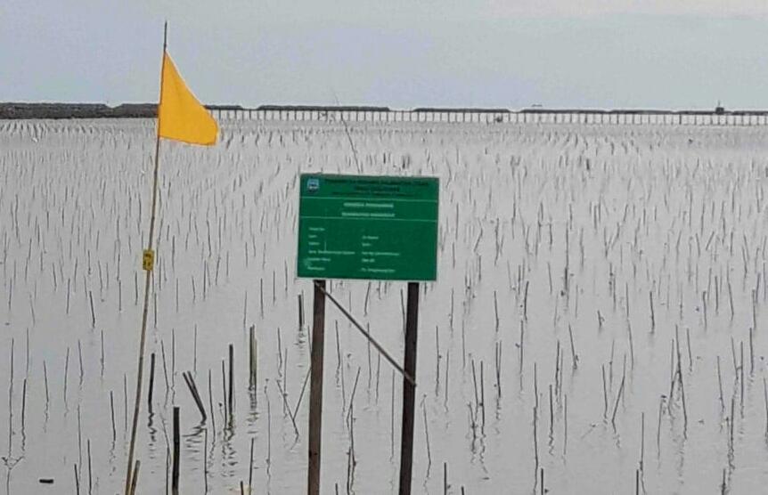Lokasi reboisasi manrove di Sebatik, Kalimantan Utara