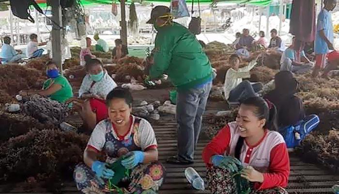Cegah Corona, PPP Nunukan bagikan masker kepada para pembudidaya rumput laut