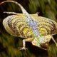 Sareuek Binatang Penanda Tanda-Tanda Alam