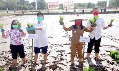 Bupati Landak dorong masyarakat bertani meski masih pandemi Covid-19.