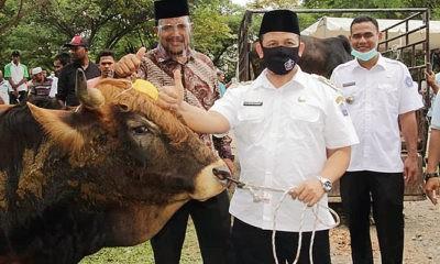 Bupati dan Wakil Bupati Pidie Jaya bagikan hewan kurban Idul Adha 1441 H.