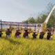 Dandim 0803 Madiun bersama Walikota Madiun Drs. H. Maidi, melaksanakan panen padi
